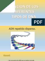 340464979-Tipos-de-ADN.pptx