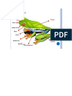 1_esquema anfibios.pdf
