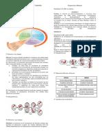 ciclo celular, mitosis, meiosis.docx