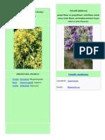 Törökmező védett növények állatok zoo.docx