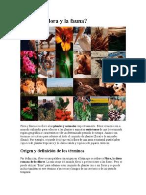 Que Es La Flora Y La Fauna Origen Y Definicion De Los Terminos