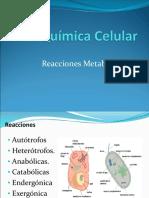 Quimica Celular Reacciones Metabolicas Presentacion Powerpoint