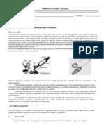 Guía de laboratorio células 5°