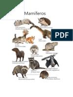 Animales Segun Su Especie