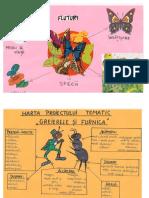harti_pentru_proiecte_tematice_cu_tema_insecte.doc