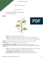 El Tallo_partes,Clasificación y Funciones
