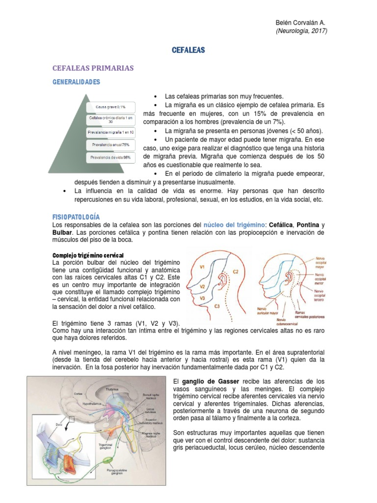 Excelente Locus Cerúleo Anatomía Imágenes - Anatomía de Las ...
