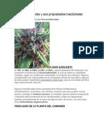Los Cannabinoides y Sus Propiedades Medicinales
