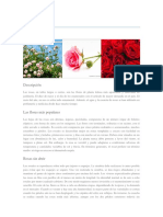 Rosa Monografias