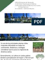 Diseño Planta de Yuca