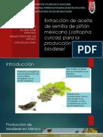 Extracción de Aceite de Semilla de Piñón Mexicano (1)