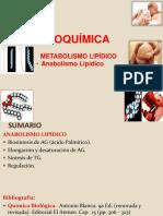 Bioquímica anabolismo lipídico
