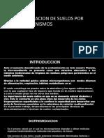 Biorremediacion de Suelos Microm