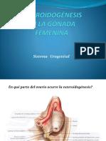 Esteroidogénesis en Ovario