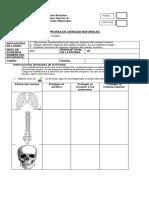 Evaluación ciencias 2° básico huesos y musculos (forma A y B)