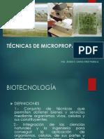 Técnicas de Micropropagación