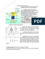Las partes del cuerpo humano.docx