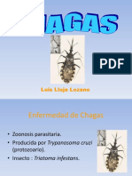 Chagas Luis Lloja