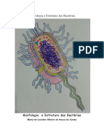 Morfologia e Estrutura Das Bactérias