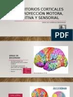 Territorios corticales de proyección motora, sensitiva y sensorial.