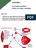 3er parcial anato .pdf