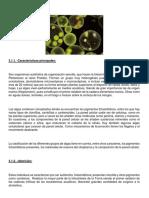 Algas Microscópicas