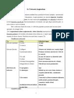 11. Urticaria.doc