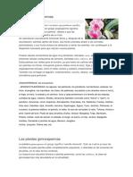 Plantas angiospermas