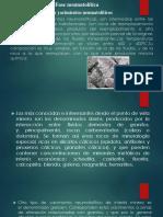 neumatolitico.pptx