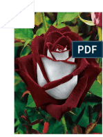 fotos flores.docx