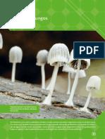 Fungos - Sergio Linhares