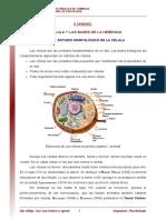 05_Estudio_morfologico_de_la_celula.pdf