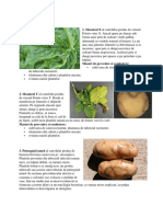 Boli Si Daunatori La Cartofi
