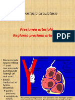 Homeostazia circulatorie