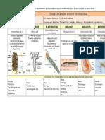 1.Etapas Del Proceso Digestivo en Invertebrados y Vertebrados