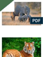 imagenes animales_19marzo_SCMayor.docx