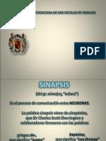Sinapsis y Neurotrasmisores
