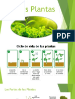 3ro Basico Las Plantas