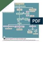 Algoritmos Monoartritis, Oligoartritis y Poliartritis