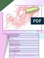 Enterobacteriasklebsiella Salmonella Serratia