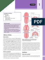 Embriología Nervioso