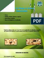 Almacenamiento y Procesos de Cosecha 1.pptx