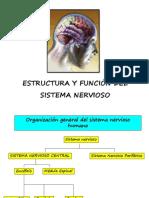 ESTRUCTURA FUNCIÓN DEL SISTEMA NERVIOSO.ppt
