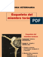 1 Esqueleto de Espalda, Brazo, Antebrazo