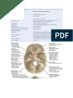 neuro grey.docx