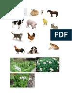Animales y Plantas Marvin David