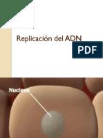Replicaciòn ADN