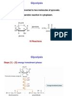 Glycolysis and Regulation