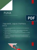 Animales en peligro de la Puna.pptx