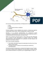 NEURONA.docx